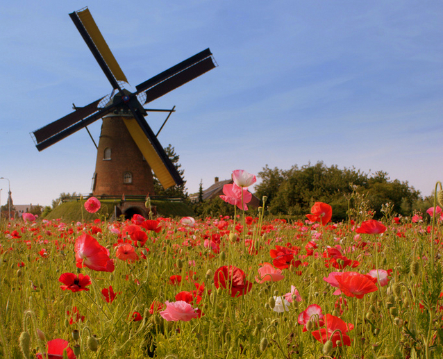 Work-life balance is easy in the Netherlands   MNN - Mother Nature Network