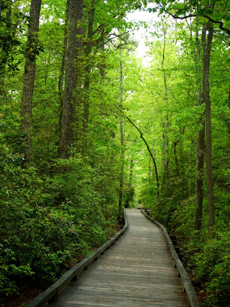 A Walk in the Woods » American Scientist